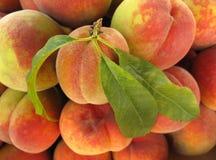 Pfirsiche mit grünen Blättern Lizenzfreie Stockfotografie