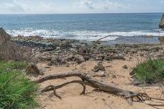 Pfirsichfarbenes Beachy lizenzfreies stockbild