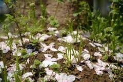 Pfirsichniederlassungsblumenblatt- und -grasland Lizenzfreies Stockbild