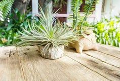 Pflänzchen auf Holztisch in der Gartenansicht Lizenzfreies Stockfoto