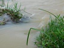 Pflänzchen auf Wasser Stockfoto
