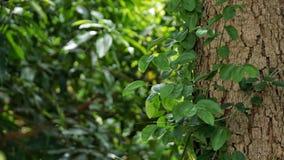 Pflänzchen, das auf dem großen Baum wächst stockbilder