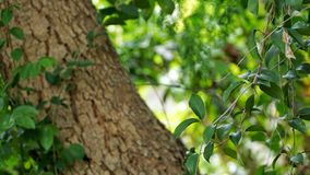 Pflänzchen, das auf dem großen Baum wächst lizenzfreies stockfoto