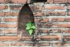 Pflänzchen, das auf einer Wand wächst Lizenzfreie Stockfotografie