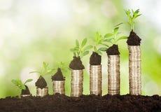 Pflänzchen, das auf Staplungsmünzen wächst Lizenzfreie Stockfotos