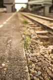 Pflänzchen, das zwischen der Eisenbahn heranwächst Lizenzfreie Stockfotos
