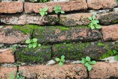 Pflänzchen, die auf einer Wand wachsen Stockfoto