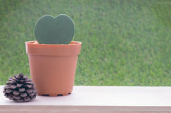 Pflänzchen im Herzform-Blumentopf und in der trockenen Kieferfrucht Stockbilder