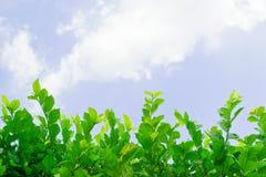 Pflänzchen mit Himmel lizenzfreie stockfotografie