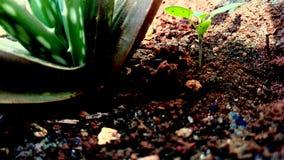 Pflänzchen wachsen Stockfotos