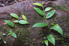 Pflänzchen wachsen auf einem Klotz Stockfotos