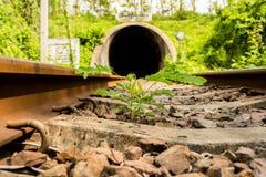 Pflänzchen wachsen zwischen der Eisenbahn heran Lizenzfreies Stockfoto