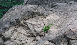 Pflänzchenwachstum in den Felsen stockfotos