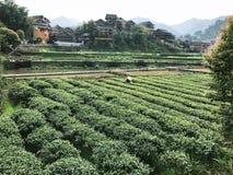 Pflücker auf Teeplantage in Chengyang-Dorf Lizenzfreie Stockfotografie