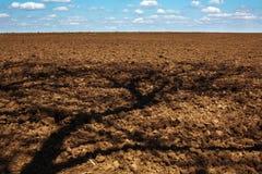 Pflügen des Feldes des Ackerlandes mit Schatten vom Baum lizenzfreie stockfotografie
