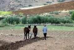 Pflügen von The Field in Marokko lizenzfreie stockfotografie