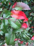 Pflanze. Herbst September Autumn rot royalty free stock images