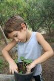 Pflanzen Lizenzfreies Stockbild