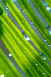 Pflanzen Lizenzfreie Stockfotos