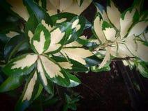 Pflanzen lizenzfreies stockfoto