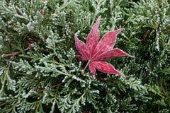 Pflanzen 25 Stockbild