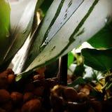 Pflanzen Arkivbilder