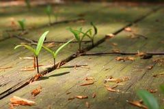 Pflanzen Lizenzfreie Stockbilder