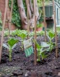 Pflanzen der Tomaten Fava/Puffbohnen, die mit Bambusrahmen wachsen Lizenzfreie Stockfotos