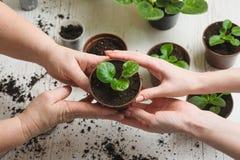 Pflanzen der Zimmerpflanze Lizenzfreie Stockfotografie