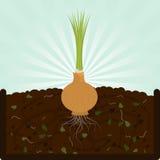 Pflanzen der Zwiebel und des Komposts vektor abbildung