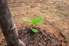 Pflanzen des Baums Stockfoto