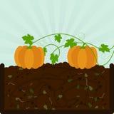 Pflanzen des Kürbises und des Komposts vektor abbildung