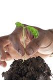 Pflanzen des neuen Wachstums Stockbilder
