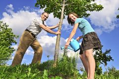 Pflanzen eines Baums Stockfoto