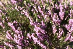 Pflanzen eines Gartens Lizenzfreies Stockfoto