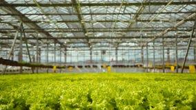 Pflanzen im Gewächshaus stock video