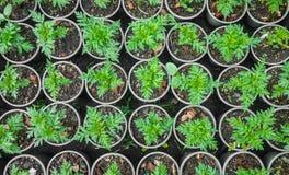 Pflanzen im Jardiniere Stockfotos