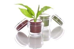 Pflanzen- Sahne der Kosmetik Stockfotos