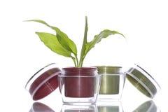 Pflanzen- Sahne der Kosmetik Stockbild