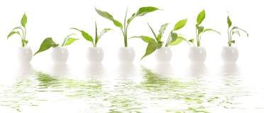 Pflanzen- Sahne der Kosmetik Stockfoto