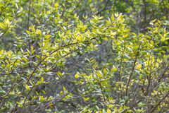Pflanzen Sie Beschaffenheitshintergrund, jardin botanico, Valencia, Spanien Stockfotos