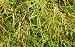 Pflanzen Sie Blätter Lizenzfreie Stockfotos