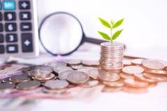 Pflanzen Sie das Wachsen auf Münzen, Geschäftsbauzustands-übersichtsbericht Konzept mit Taschenrechner Stockfoto