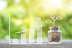 Pflanzen Sie das Wachsen in den Einsparungensmünzen und wachsendes Diagramm auf hölzernem Inve Stockfoto