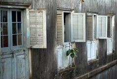 Pflanzen Sie das Wachsen von einer Fassade, Steinstadt, Sansibar lizenzfreies stockbild