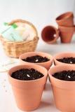 Pflanzen Sie die Gurkensamen in den keramischen Töpfen Stockbild