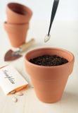 Pflanzen Sie die Kürbisstartwerte für zufallsgenerator im keramischen Potenziometer Stockbilder