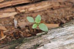 Pflanzen Sie einen Baum Lizenzfreies Stockfoto