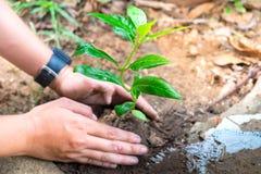 Pflanzen Sie einen Baum für Weltumwelt Stockfotos