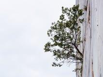 Pflanzen Sie geborenes in einem Sprung des Marmorberges Lizenzfreie Stockfotos
